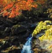 [길따라 바람따라 맛따라 | 지리산] 피아골 단풍은 가을의 전설이다