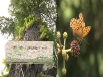 VISIT SEOUL-서울기행2 홍릉수목원(Hongneung Arboret…