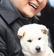 """동물단체들 """"청와대 진돗개 번식견 전락 우려…반려동물로 살아야"""""""