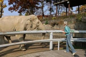 [동물박사가 들려주는 동물이야기] <2>동물원의 긍정적 변화와 강화훈련