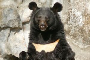 [동물박사가 들려주는 동물이야기] (3) 반달가슴곰 복원 프로젝트