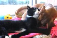 하반신 마비된 고양이 돌보는 견공 화제