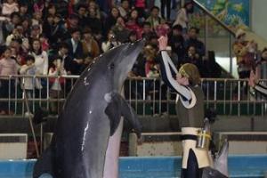 [동물박사가 들려주는 동물이야기] <9>남방큰돌고래 '제돌이'의 귀향