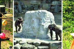 [동물박사가 들려주는 동물이야기] <12> 동물행동풍부화 프로그램 시행 10년