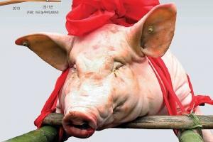 [김규환 선임기자의 차이나 로드] 왕서방 '돼지사랑'에 세계가 출렁