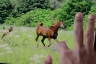 어도비의 신기술 담은 '앱의 미래' 영상 화제