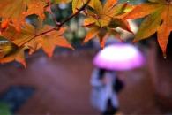 [오늘의 포토영상] 가을비 촉촉히 내리는 서울의 오색…