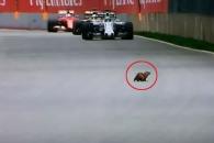 포뮬러 원 경기 트랙에 나타난 거대 다람쥐  '아찔'