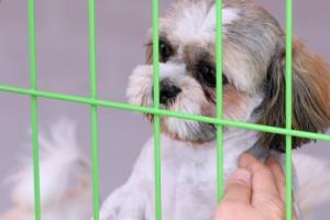 동물학대 상습범 강력 처벌…'강아지공장' 관리 강화