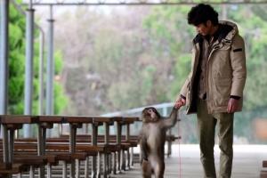 [포토 다큐] 행복하지 않은 원숭이, 재주 넘지 않아요