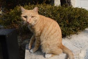 고양이 AI 감염 의심 사례 발생…사체에서 AI H5N6형 바이러스 검출