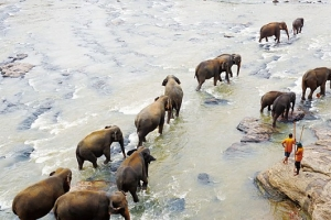 해외여행 | 스리랑카-코끼리의 나라에서 일어나는 일
