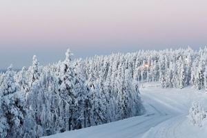 해외여행 | 핀란드-명백히 아름다운 북위 67.8 레비Levi