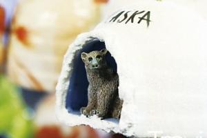 해외여행 | 알래스카ALASKA - 위대한 양탄자를 타려면 시간이 없다