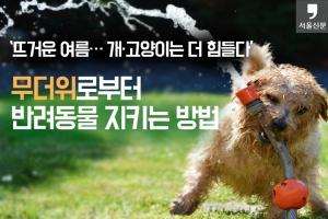 """[카드뉴스] """"뜨거운 여름… 개·고양이는 더 힘들다"""" 무더위로부터 반려동물 지키는…"""