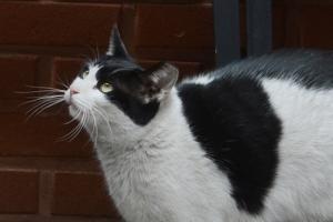 포천서 고양이 AI 의심사례 발생…사람에게 전염 여부는?