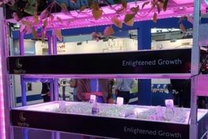 [ICT, 농부가 되다<1>] LED 채소·인조고기… 식량위기 타개, 스마트팜이 '열쇠'