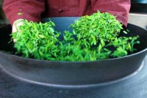 茶만드는 전통기법 '제다', 국가무형문화재 130호로 지정