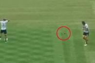 선수들 연습중 축구공에 맞은 비둘기, 과연?