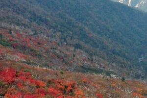 성큼 찾아온 가을