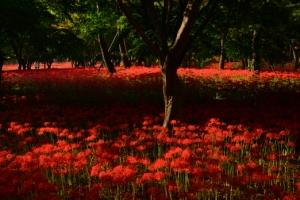가을아, 너 온다길래 붉은 융단 깔아 놨단다