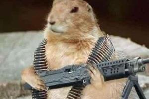 [송혜민 기자의 월드 why] 정찰용 비둘기·코끼리 부대… '살아 있는 무기'로 전락