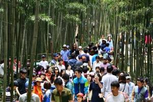 [新국토기행] 대나무숲 걷노라면 竹我一體