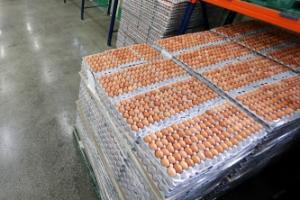 계란 한판 가격 6000원 넘었다.. AI 확산에 수급 '비상'
