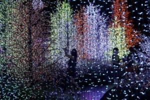 [포토] 80만개가 넘는 전구가 만들어 낸 '빛의 장관'