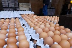 경남 양산지역 산란농가 계란 550만개 반출로 영남권 계란난 숨통