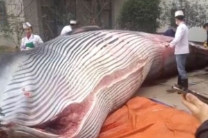직원들 점심으로 고래 사들인 中 회사 논란