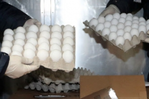 다음주 마트서 흰색 계란을 봤다면…그건 수입한 미국산