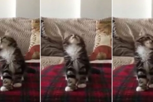 테크노 리듬 맞춰 춤추는 고양이