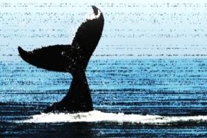 [씨줄날줄] 서해 불법 고래 포획/이동구 논설위원