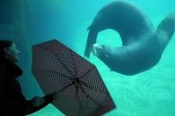 돌고 도는 바다표범 영상 '화제'