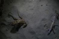 [반전영상] 문어와 게의 결투, 과연 누가 이길까?