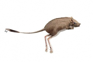 1억년전 한반도 진주에 캥거루처럼 뛴 포유류  '코리아살티페스 진주엔시스'