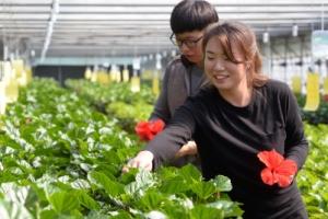[新전원일기] 연 매출 10억… '덴마크 무궁화' 꽃이 피었습니다