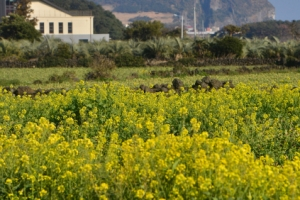 [손원천 전문기자의 호모나들이쿠스] 고요한 섬…오롯한 봄 오롯한 쉼