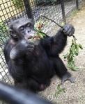 침팬지에 '사람 지위' 부…