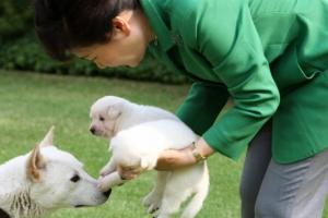 [김유민의 노견일기] 개를 사랑한다는 거짓말