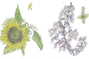 [그 책속 이미지] 한 송이의 꽃, 그 치열한 몸짓… 진정 아름답구나!