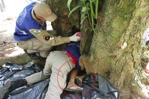 토끼 쫓다 나무 구멍에 낀 소년, 2시간 만에 구조