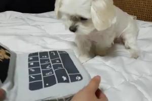 노트북 쿠션 내밀자 강아지가 보인 귀여운 행동