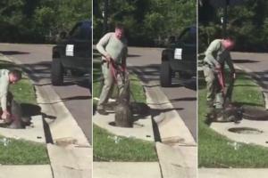 '저 좀 꺼내 주세요!' 하수구 맨홀에 갇힌 야생 악어