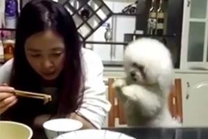 """""""이래도 안 볼 거야?""""…앙탈 부리는 강아지 영상 '화제'"""