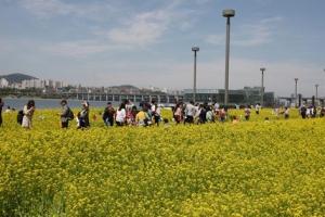 '서울의 봄'…꽃잔치 열리고 공원서 즐기고 호기심 채우고