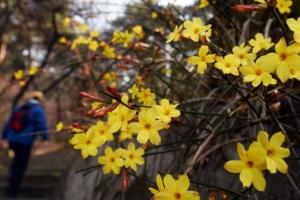 봄, 꽃피다