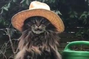 '저 기품 있죠?' 사람보다 모자 잘 어울리는 고양이
