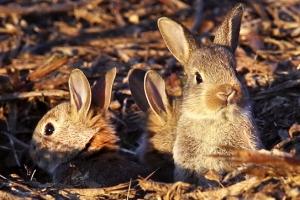 [포토]굴 바깥 세상 궁금한 아기 토끼들